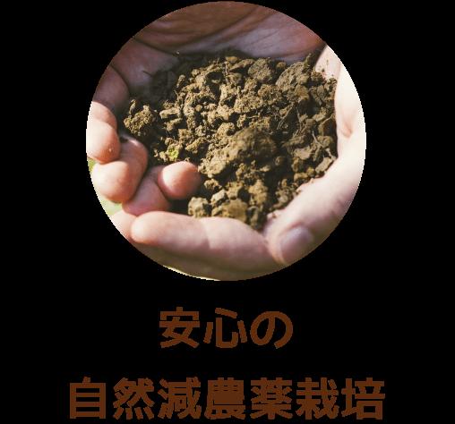 安心の自然減農薬栽培